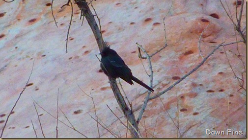 Christmas bird count red rock canyon_021