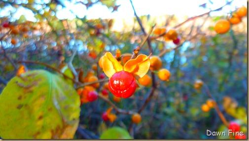 Autumn_022