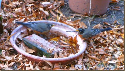 Birds around Dells_021