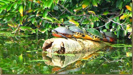 Turtle (8)