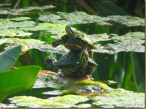 Turtles jeffs (2)