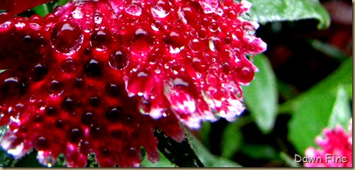 Water droplets and flowers_014 (1)