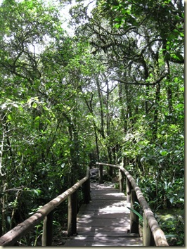 Boardwalk trail God's Window Blyde River Canyon Nature Reserve Mpumalanga South Africa