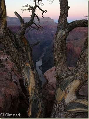 Up stream Colorado River thru snag Toroweap Grand Canyon National Park Arizona