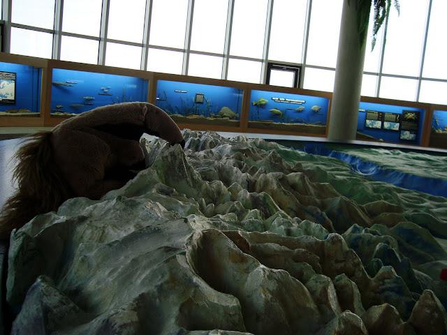 Tadeusz lubi morza, lubi też góry...