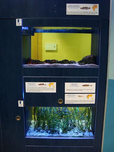 Górne akwarium zamieszkują babki bycze, dolne zaś cierniki, cierniczki i krewetki atlantyckie.