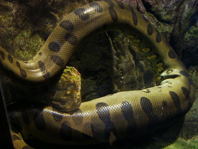 I sama anakonda zielona