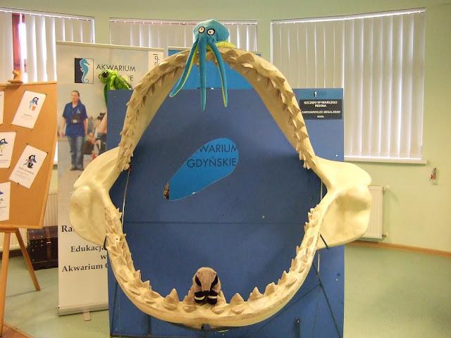 Pamiatkowa ftoka ze szczęką rekina i pluszową ośmiornicą