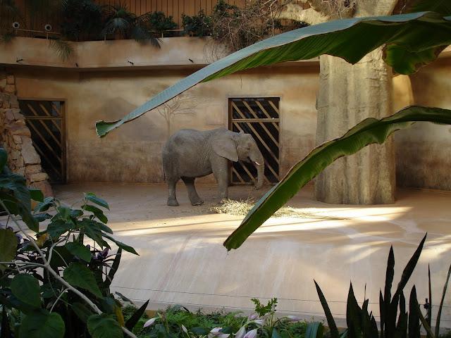 Słoniarnia