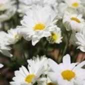 fotos de flores e plantas para festas de casamentos e aniversarios