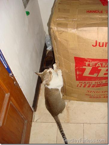 Cat Welcoming Committee 2