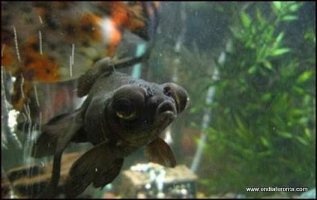 fish-faces12.jpg
