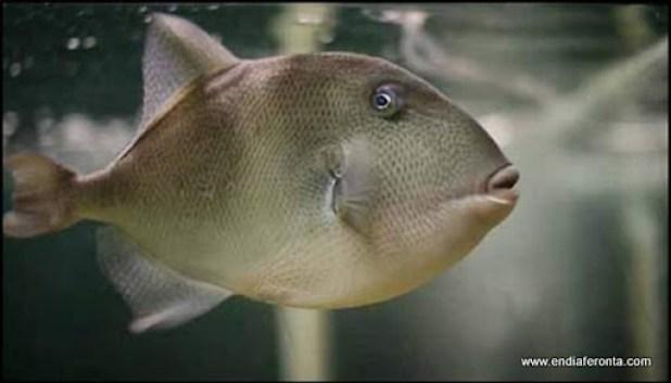 fish-faces23.jpg