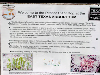 Pitcher Plant Bog Restoration