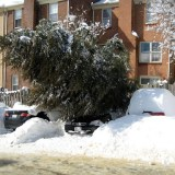 You can tell from this photo that the full weight of the tree is NOT bearing down on Kelly's car.