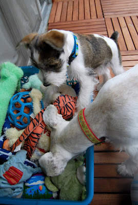Maui: Which one should we play with?