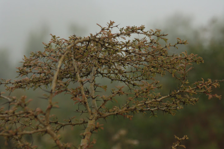 Thorny Bush by Vaibhav