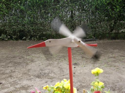 Ciconia ciconia, fehér gólya, gilice