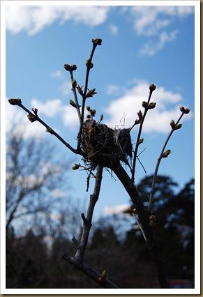 lilac nest