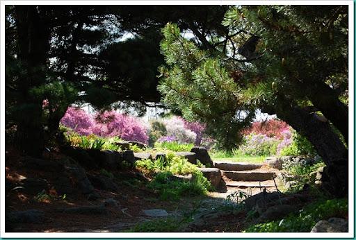Rock Garden Pink Window