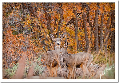 DSC_0096-deer-in-leaves