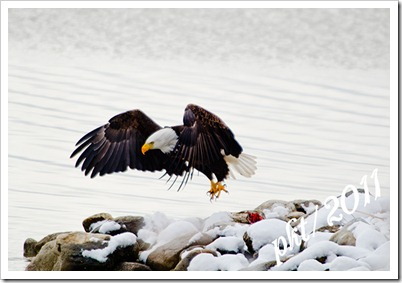 DSC_3208eagle-taking-off