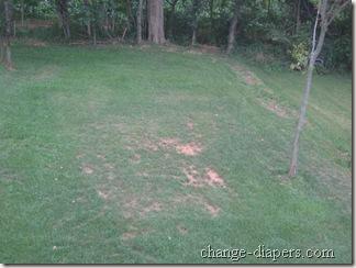grass aug 24