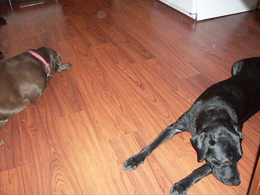 Oso and Emmy Ignore Each Other