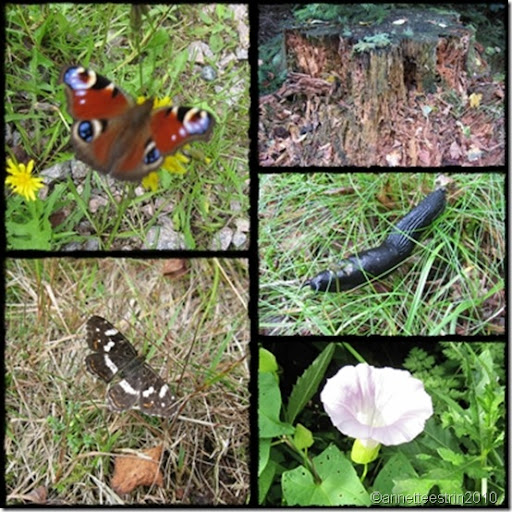 blandet natur collage