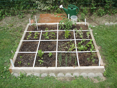 Progress in the squarefoot garden