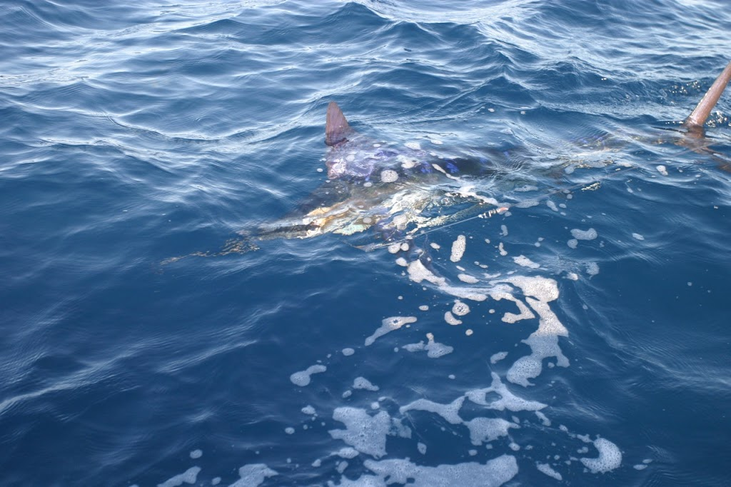 Fishing for Striped Marlin and Sailfish in East Cape and Baja