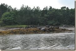 ED on the rock island