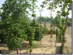 Shivanand Trees