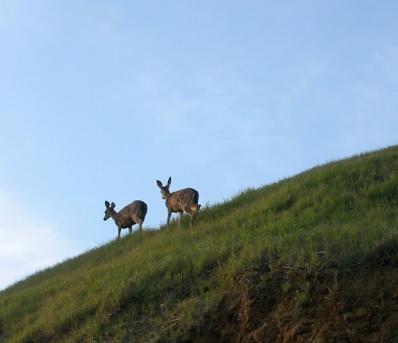 Deer on the horizon