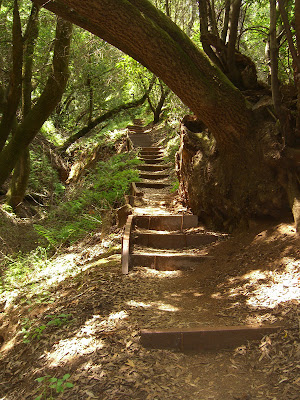 Steep Hollow Trail for Dipsea-like steps