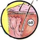 test 8 Emberi test: test, fej, szem, kéz, láb; Belső szervek az emberek angolul képeken keresztül