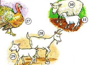 27. Turquía 28. cabra 29. chico 30. ovejas 31. Cordero