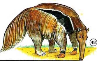 48. anteater