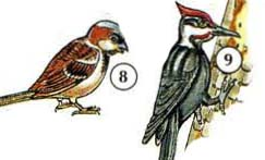 8. sparrow 9. woodpecker a. beak