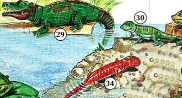 29 ။ 30 cocodrilo ။ Lagarto 34 ။ Salamandra