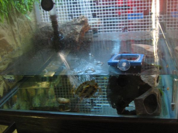 Rex's side of the turtle tank