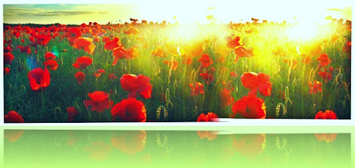 pop_poppies