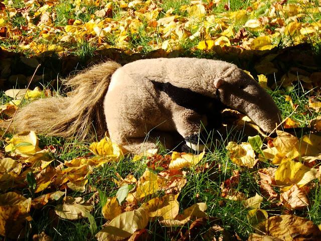 Mrówkojad jesienny - pluszowy Tadzik w Starym Zoo