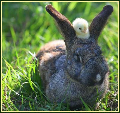Buona Pasqua !!