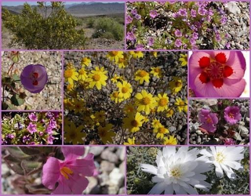 Apr 3 Shoshone and Tecopa