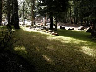 April yard Rocky Point (15)