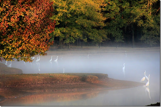 photoshare Peace On Earth In Fog Pike Road AL dixiedaughter