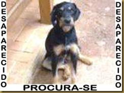 p22_hugo
