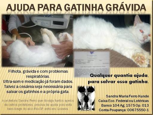 sandraferro_gata