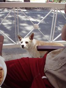 Corfu Paleokastritsa Greece dog PePe